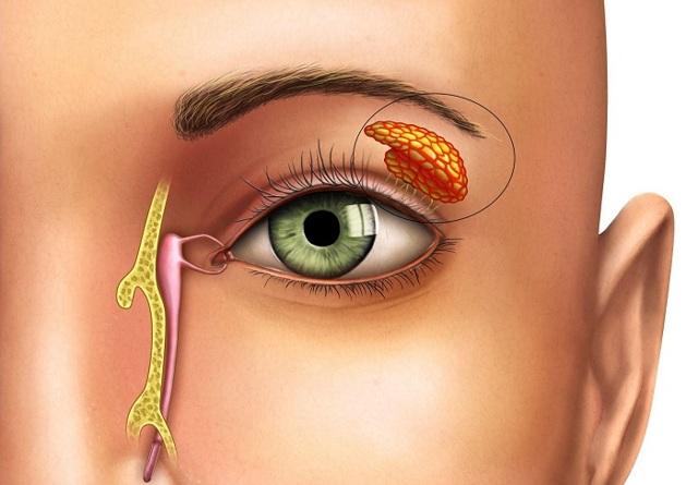 Конъюнктивальный мешок глаза: где находится конъюнктивальная полость?