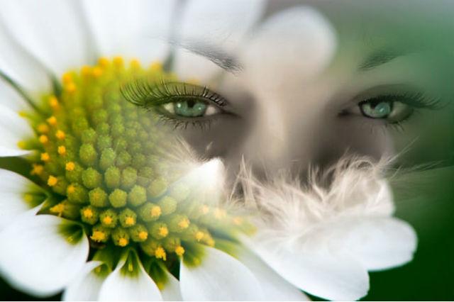 Травы для улучшения зрения в народной медицине, рецепты трав улучшающие зрение для восстановления