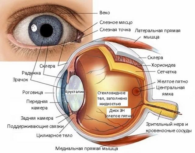 Зрение у новорожденных, этапы развития зрения у младенцев